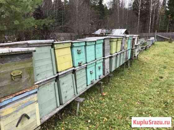 Продам ульи для пчёл и пчелосемьи Нолинск