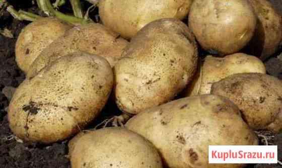 Картофель Доброе