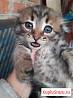 Кошечки и котики дедушка с туманного альбиона