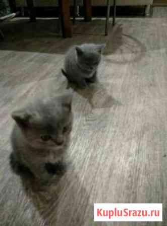 Отдам двух котят Выгоничи