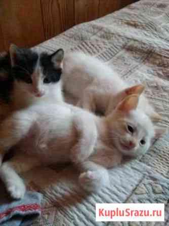 Коты в опасности Ангарск