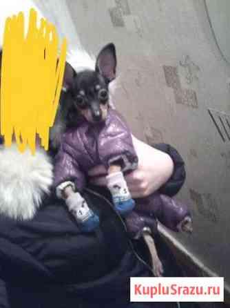 Костюм для маленькой собачки Красноярск