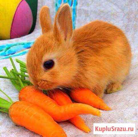 Супер-мини кролики Москва