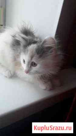 Отдам в добрые руки.хорошеньких котят возраст 1.5м Ялга
