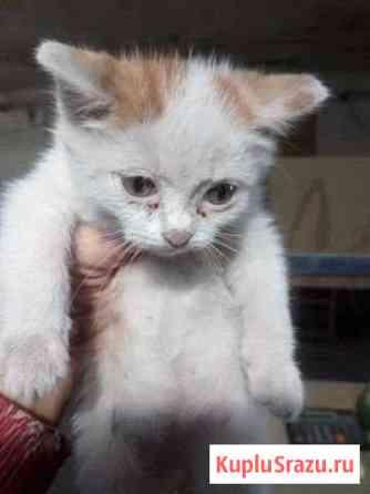 Котёнок Рубцовск