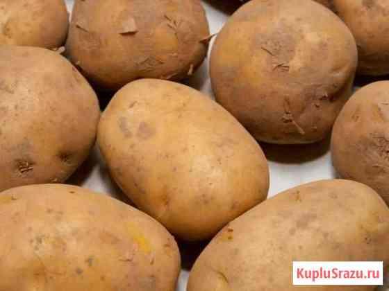 Картофель Бичурский с доставкой Улан-Удэ