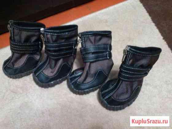 Обувь для большой собаки Волгоград