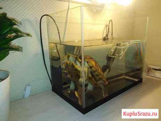Красноухая черепашка в аквариуме с фильтром и подо Красноярск
