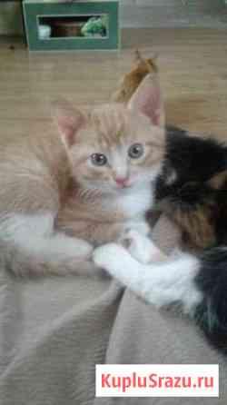 Котята в добрые ркки 1 месяц Домодедово
