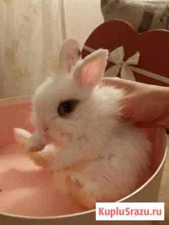 Карликовые крольчата. Привиты.Доставка Москва