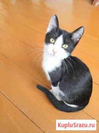 Отдам котёнка Ишимбай