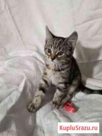 Котятки ребятки ищут дом Калининград