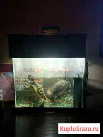 Аквариум с черепахами Стерлитамак