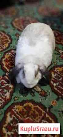 Кролик декоративный с клеткой Петропавловск-Камчатский