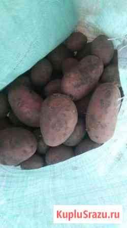 Продам картошку деревенскую Смоленка
