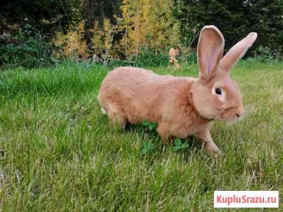 Кролики Архангельск