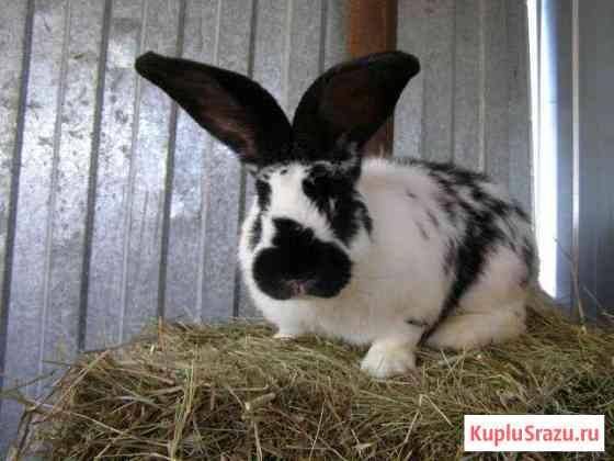 Кролики Нижняя Тура