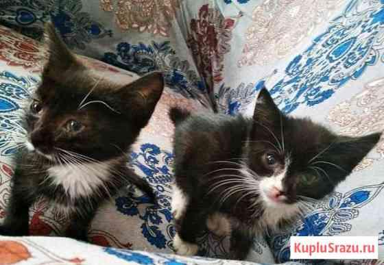 Кошечки ищут дом Ряжск