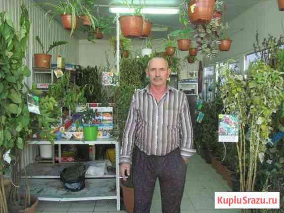 Саженцы плодовых культур и декоративных растений Сочи