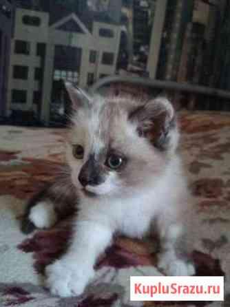 Классная котейка Шелехов