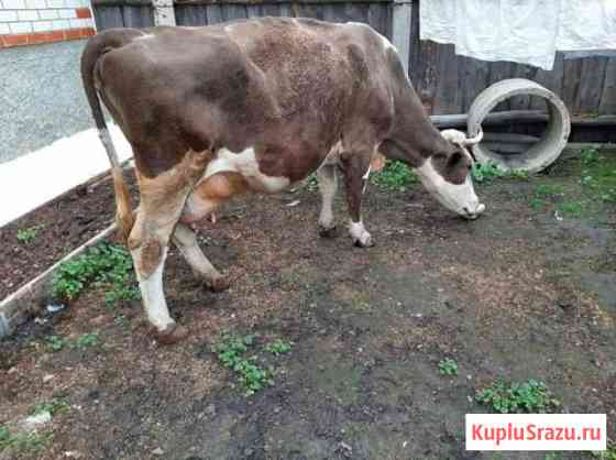 Корова Городище