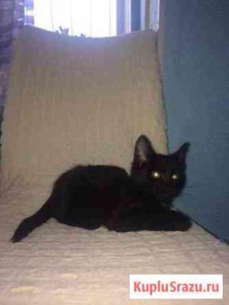 Котик Ишимбай