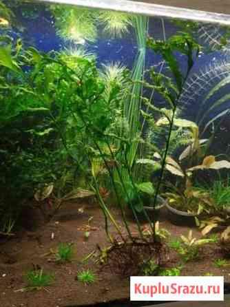 Растения аквариумные Люберцы