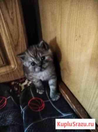 Котёнок Рославль
