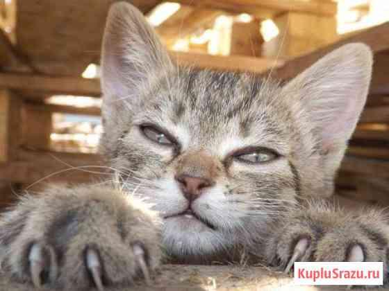 Ножницы для стрижки когтей кошки Дзержинск