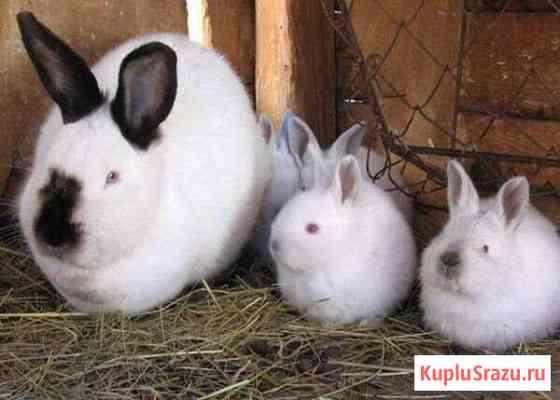 Продам кроликов, мясо кроликов Улан-Удэ