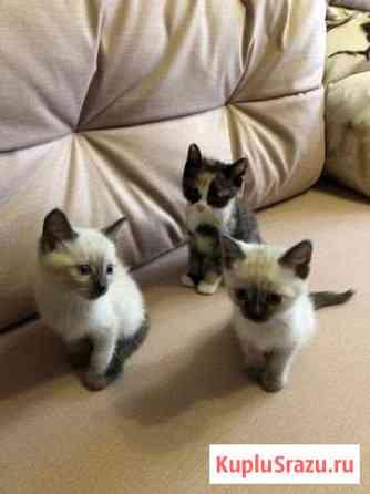Отдам котят в заботливые руки Кемерово