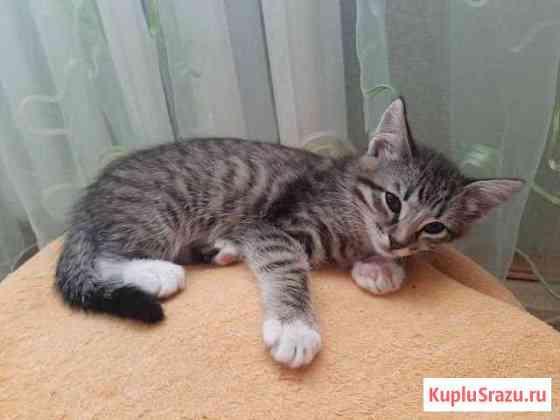 Котёнок в добрые руки Белев