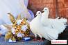 Голуби на свадебные торжества