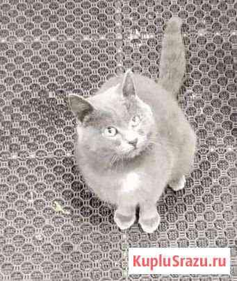 Ласковый котик в добрые руки Славгород
