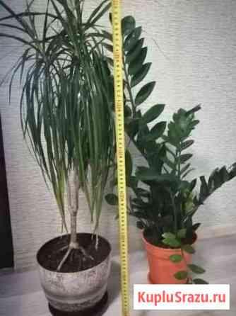 Домашние растения Лабытнанги