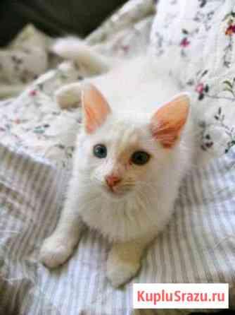 Отдам в добрые руки котят помеси турецкой ангорки Мичуринск