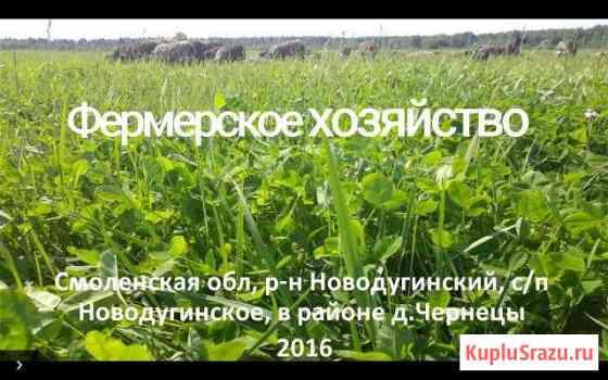 Фермерское хозяйство Сычевка