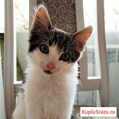 Ваш котенок Калининград