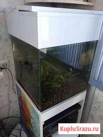 Аквариум Новосибирск