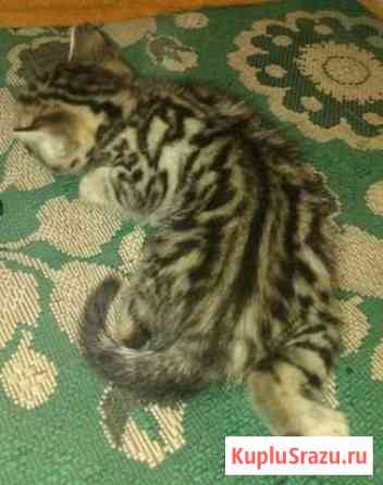 Кошечка Кемерово