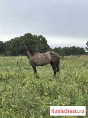 Лошадь Благовещенск