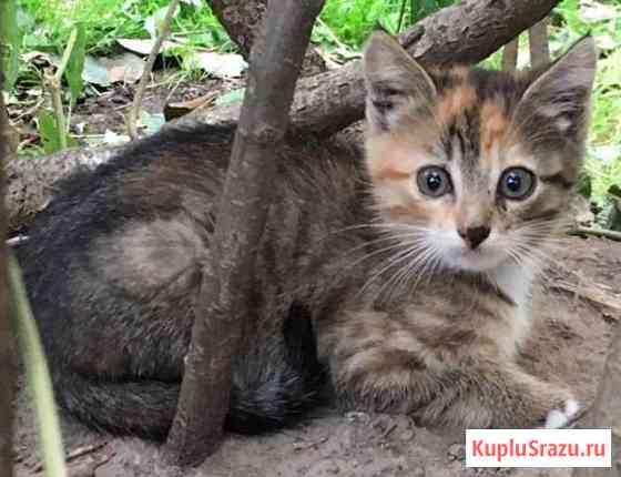 Отдам котенка в добрые руки Обнинск