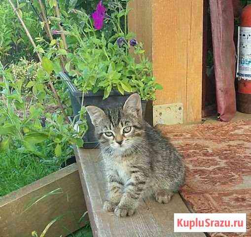 Котенок Глазов