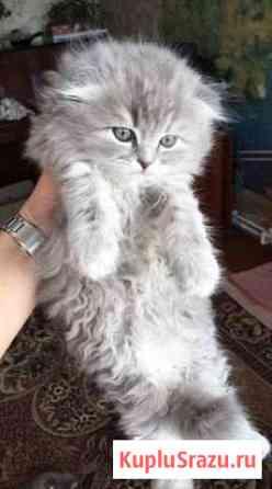 Плюшевый котик Тамбов