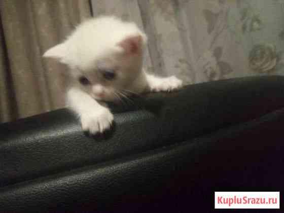 Котят в добрые руки Зональная Станция