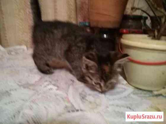 Продам котенка девочку 1,5 мес лотку приучена Ковров
