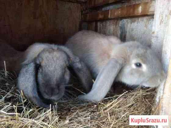 Кролики Торжок