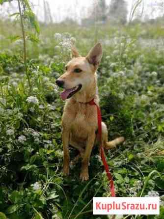 Элли - собака от Фонда  Спасение Великий Новгород