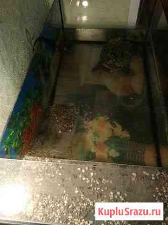 Черепаха Красноухая + терариум 100литров Нижняя Салда