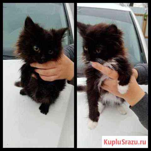 Красивые котята ищут дом Ковров